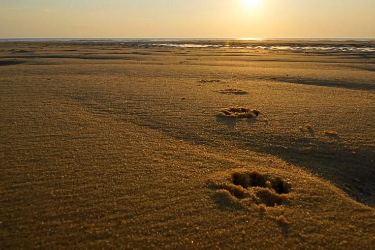 Dog walks on the beach