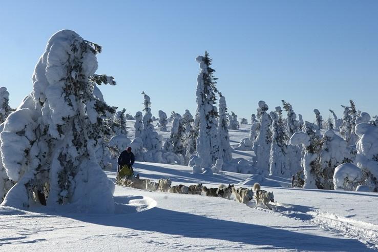Lapland Husky Ride