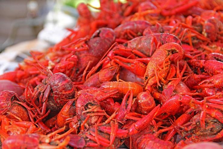 Louisiana Crawfish, New Orleans